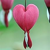 ☞ Corazón y circulación
