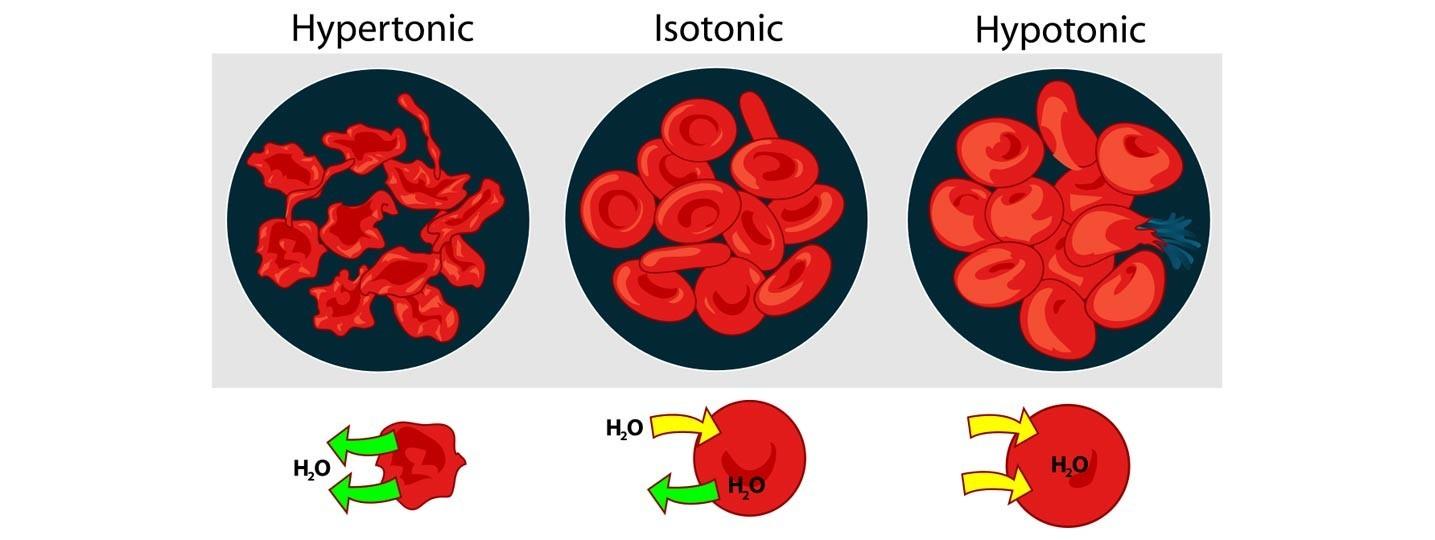 Oxigenación celular